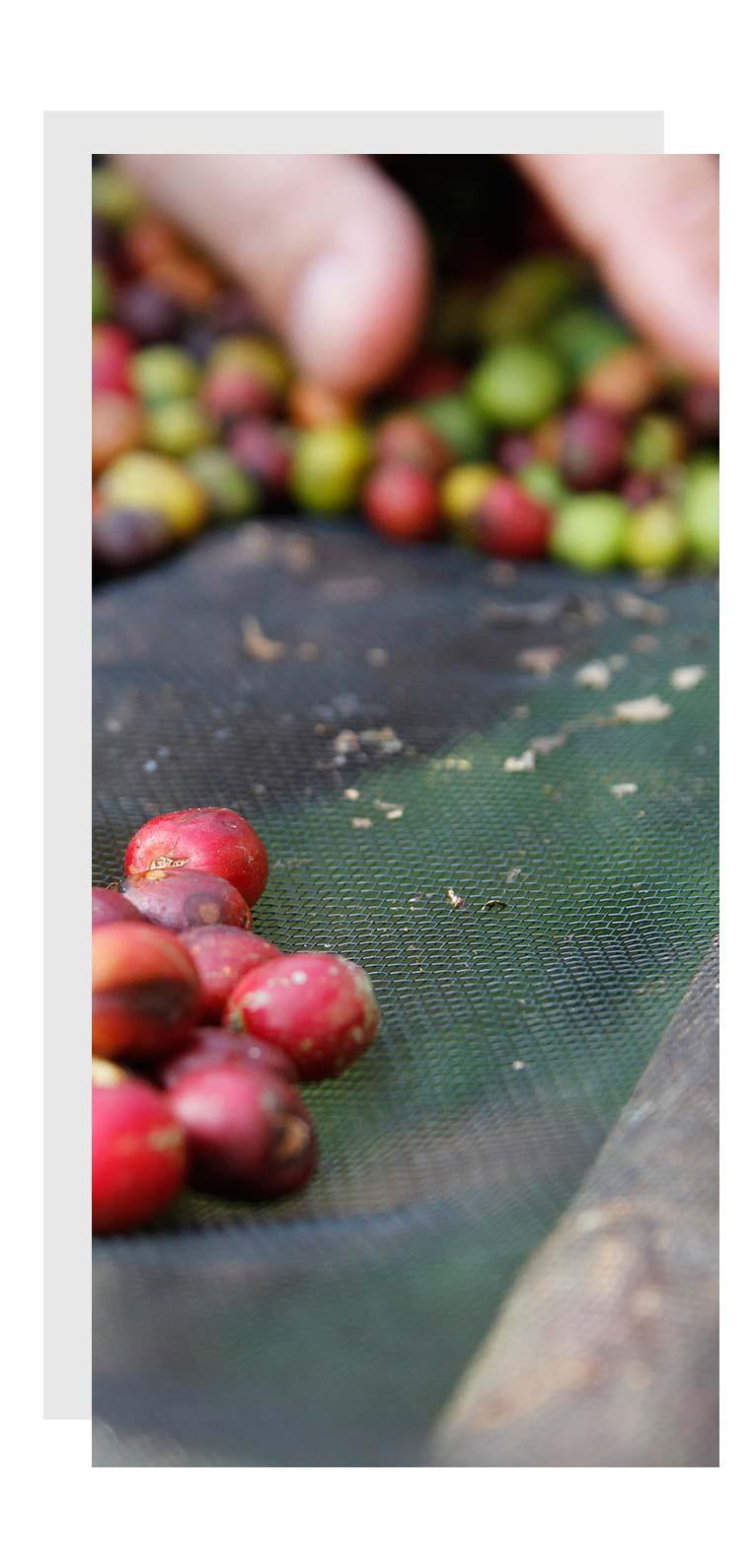 coffee-beans Coffeelab